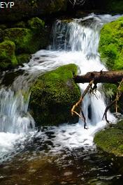 Rowe Creek, Waterton Lakes National Park