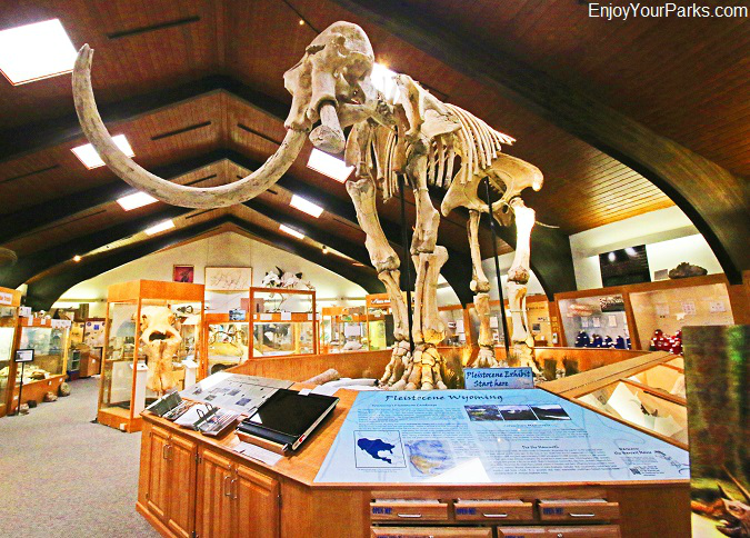 Mammoth, Tate Geological Museum in Casper, Wyoming