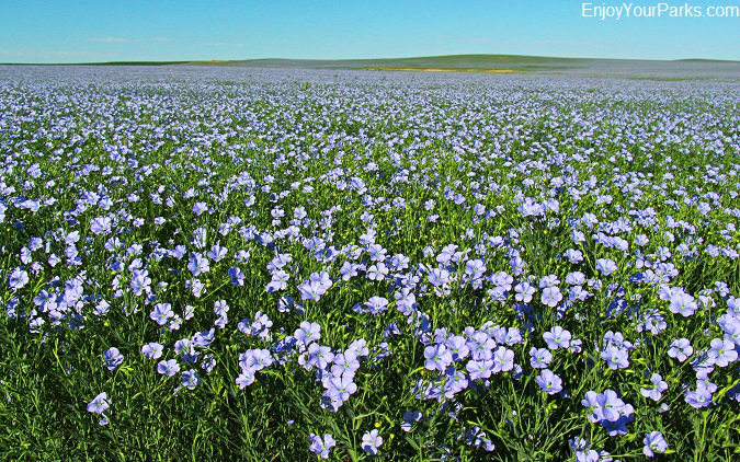 Field of Wild Flowers, Enchanted Highway, North Dakota