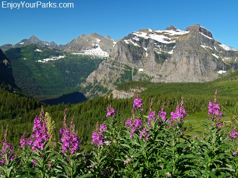 Brown Pass, Fireweed, Glacier National Park