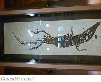 Crocodile Fossil, Fossil Butte National Monument, Wyoming