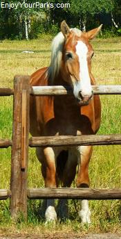 Horse, Idaho