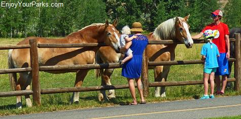 Horses at Sun Valley, Idaho