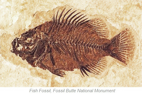 Fish Fossil, Fossil Butte National Monument, Wyoming