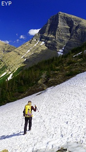Swiftcurrent Pass Trail, Glacier National Park