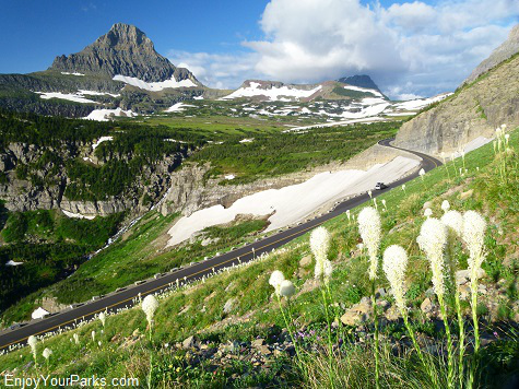 Beargrass, Going To The Sun Road, Glacier National Park