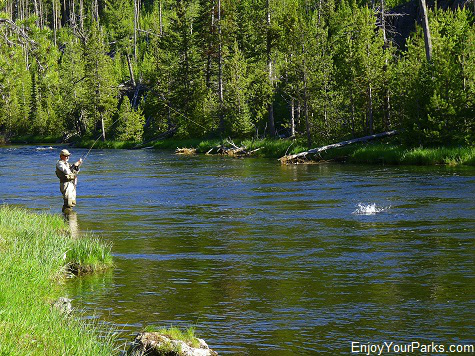 Fly Fisherman, Island Park Idaho, Yellowstone National Park