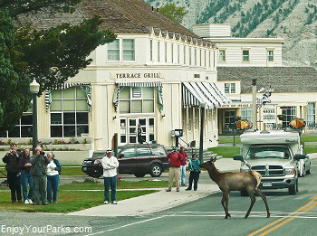 Mammoth Hot Springs Hotel, Yellowstone Park Lodging Accommodations