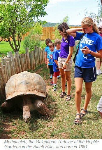 Methusaleh the Galapagos Tortoise, Reptile Gardens, Black Hills South Dakota