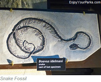 Snake Fossil, Fossil Butte National Monument, Wyoming