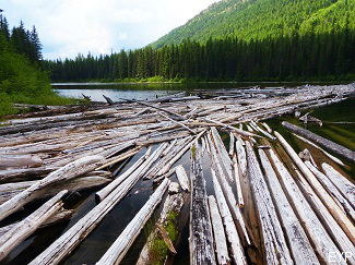 Trout Lake log jam, Glacier National Park