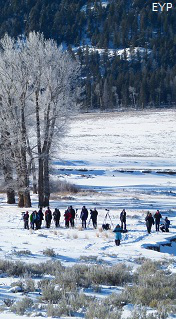 Winter in Yellowstone, Lamar Valley, Yellowstone National Park