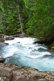 Avalanche Creek, Trail of the Cedars, Glacier National Park
