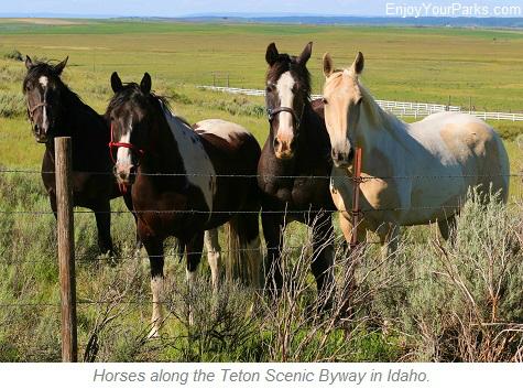 Horses along the Teton Scenic Byway in Idaho