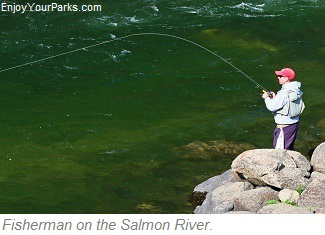 Fly fisherman, Salmon River