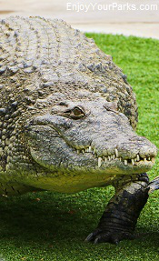 Alligator, Reptile Gardens, South Dakota