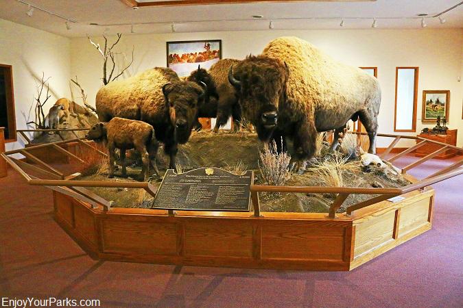 Hornady Smithsonian Buffalo, Montana Agricultural Center, Fort Benton Montana