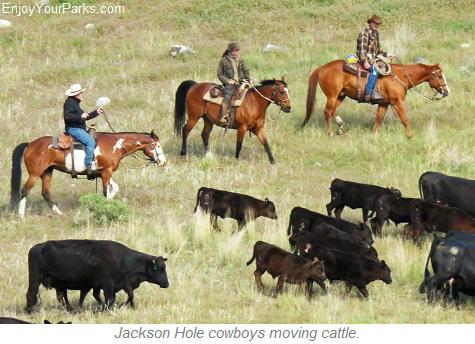 Jackson Hole Cowboys