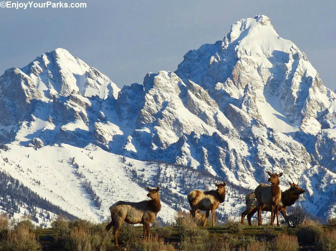 National Elk Refuge, Jackson Wyoming