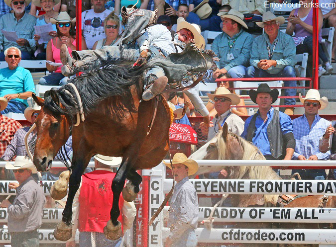 Cowboy riding a bucking bronco at Cheyenne Frontier Days Rodeo