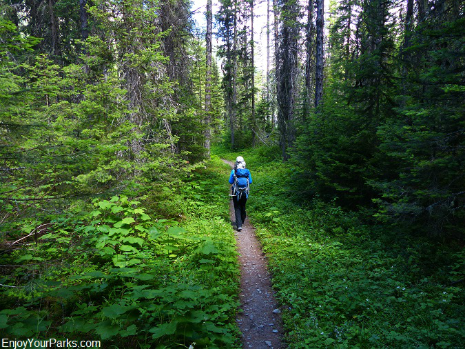 Camas Creek Trail, Glacier National Park