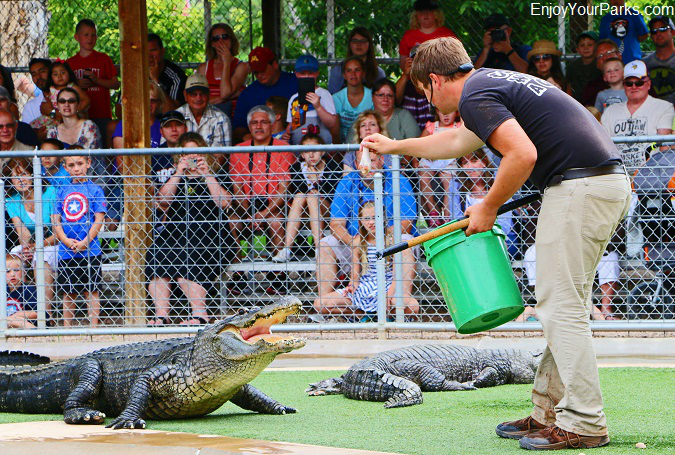 Alligator Show at Reptile Gardens, Black Hills of South Dakota