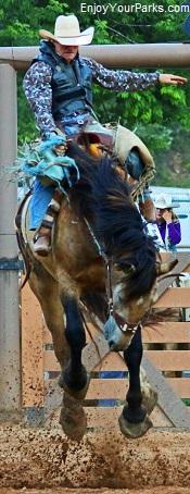 Wild Mustang,Pryor Mountain Wild Mustang Center, Montana