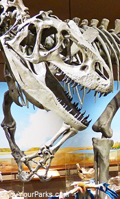 Dinosaur exhibit, North Dakota Heritage Center, Bismark