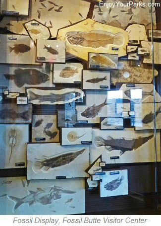 Fish Fossils, Fossil Butte National Monument, Wyoming