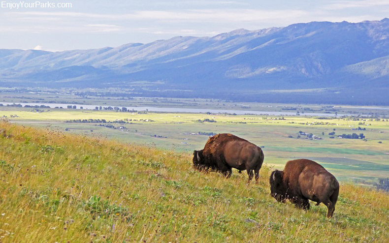 National Bison Range, Montana