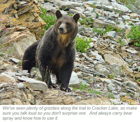Grizzly Bear, Cracker Lake, Glacier Park