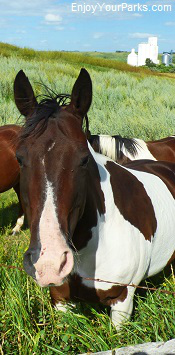 North Dakota horse