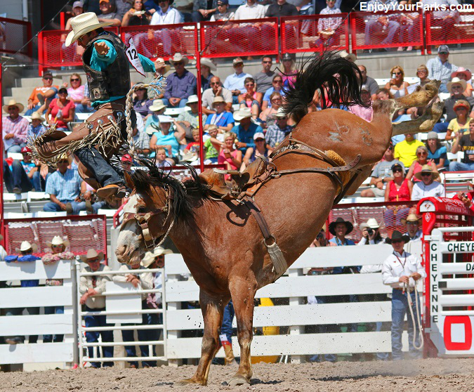 Bull rider being thrown from a bull at the Cheyenne Frontier Days Rodeo
