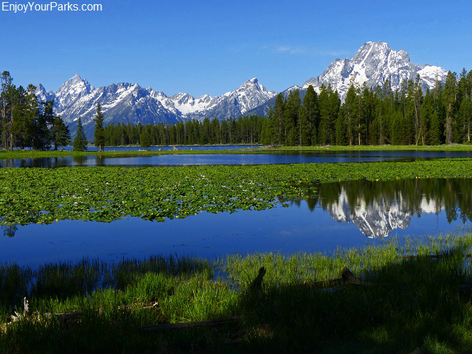 Heron Pond, Grand Teton National Park