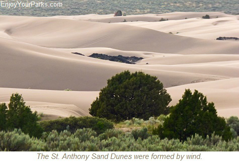 "How Are Sand Dunes Formed?  Sand dunes are basically a big mound of sand that formed by the wind, usually in the desert or a beach, but occasionally forms in non-typical areas such as the St. Anthony Sand Dunes Recreation Area.  Dunes form when the wind blows grains of sand into sheltered areas behind obstacles.  As the grains of sand accumulate, the dunes will grow.    Every dune has what is known as the ""windward"" side, which is the side where the wind blows and pushes material up.  The other side of each dune is known as the ""slipface"", which is the side that does not get wind.    There are several shapes a sand dune can take.  A few of the named shapes are Crescentic Dunes, Linear Dunes, Star Dunes, Dome Dunes and Parabolic Dunes.  As you explore the St. Anthony Sand Dunes Recreation Area, see how many of these shapes of dunes you can find."