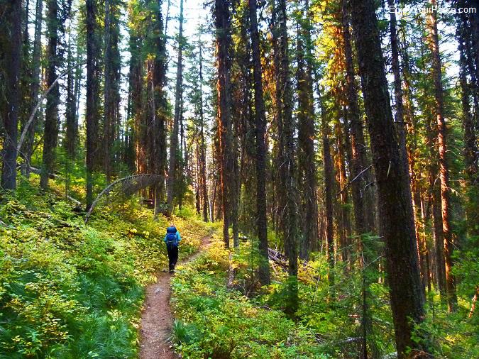 Quartz Lake Loop Trail, Glacier National Park