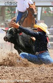 Cody Stampede Rodeo, Cody Wyoming