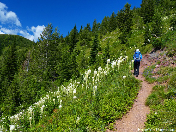 Huckleberry Lookout Trail, Glacier National Park