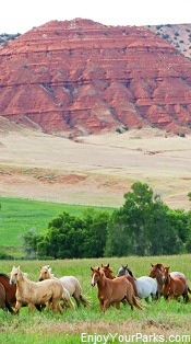 Horses near Medicine Lodge State Archaeological Site, Wyoming