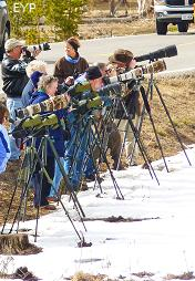 Wildlife photographers, Norris Junction Area, Yellowstone National Park