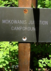 Mokowanis Junction Campground, Stoney Indian Pass Trail, Glacier National Park