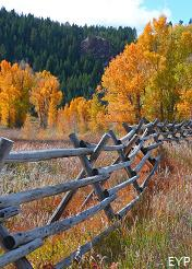 Autumn Colors, Grand Teton National Park