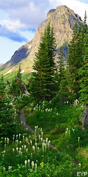 North Shore Trail, Two Medicine Area, Glacier National Park