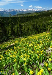 Highline Trail, Granite Park Chalet, Glacier National Park