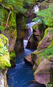 Avalanche Gorge, Lake McDonald Lodge, Glacier National Park