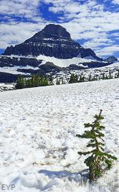 Hidden Lake Trail, Glacier National Park