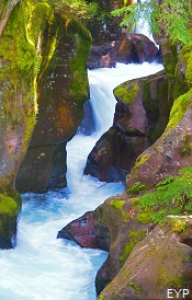 Avalanche Gorge, Trail of the Cedars, Glacier National Park